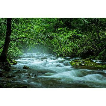Streaming in the Smokies by Jason Clemmons
