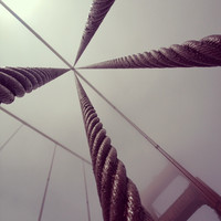 Looking up at the Cables