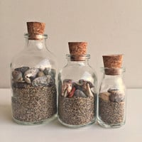 Beach in a Bottle/ Beach Theme Glass Bottles/ Seashells&Sand Beach Decor/ Coastal Decor/ Ocean Decor/ Beach House/  SET OF 3