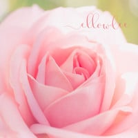 Floral Picture, Rose photograph , pink flower picture, Macro flower, fine art photography, Pink floral nursery, nursery photograph
