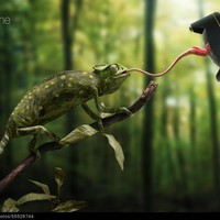 Just a chameleon action shooting with bait-lens by John Wilhelm is a photoholic | 500px Prime