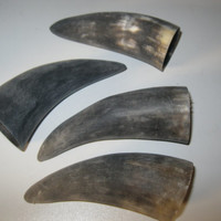 4 Cow horn tips...unfinished and raw  ......E4A...cow horn...buffalo horn....bull....steer....goat ...sheep...ram..ox