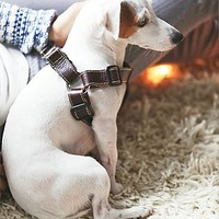 Leather Dog Co. Womens Proper Pup Leather Harness