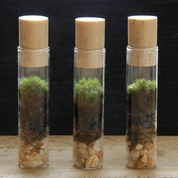 Test Tube Terrarium with Live Moss by Vertegris on Etsy
