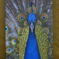 Peacock Home Decor 8x12 Wall Art, Hostess Gifts, Housewarming, Gifts for Her, Peacock Colors, Holiday Gift, Nature, Bird Watching, Christmas