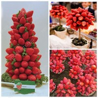 100pcs Strawberry Tree bonsai Delicious Perennial Strawberry bonsai Outdoor Courtyard Indoor Bonsai Plants DIY Home Garden Plant