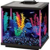 Aqueon Products - Glass - Aqueon Neoglow Aquarium Kit Cube