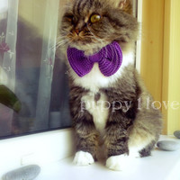 Knitted Bow / Bow Tie Cat Dog Collar Ready to Ship custom colors & sizes available