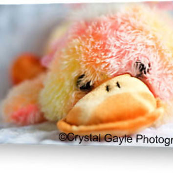 Just Ducky Birthday Greeting Card Blank Baby Shower Note Card of Fine Art Photograph Just Because Thinking Of You Get Well Soon