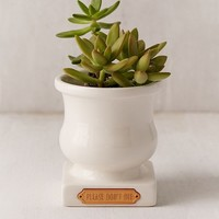 Plum & Punch Please Don't Die Planter | Urban Outfitters