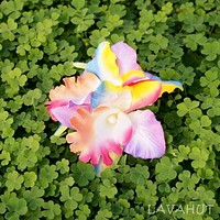 Orchid Blooms Rainbow Hawaiian Flower Hair Clip