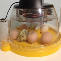 Brinsea Mini Eco Incubator A015A | Incubation and Rearing | Chicken Keeping Equipment | Omlet