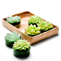 Succulent Tealight Set
