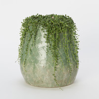 Emerald Scale Pot