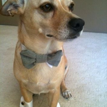 Wedding Dog Cuffs and Formal Bow Tie All Sizes