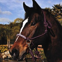 Rope Halter with Side Pull