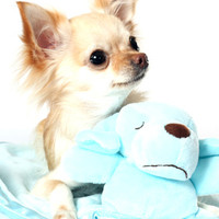 Snuggle Puppy Baby Blue Blanket (Small)   Image 3   Chihuahua Clothes and Accessories at the Famous Chihuahua Store!
