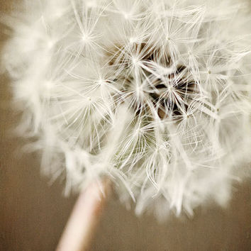 Dandelion Flower Photograph Cottage chic by LisaRussoPhotography