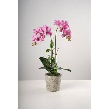 """21""""Double Soft Pink Beauty Orchid on Cement Pot-Belleza Collection"""