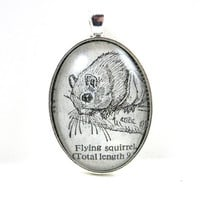 Dictionary Illustration Pendant from Vintage -- Flying Squirrel -- in Glass Tile Oval