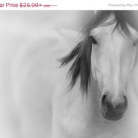 Horse Photography in Black and White - Large Wall Art Print in 20x30 16x20 or 8x10 - Also Available on Canvas