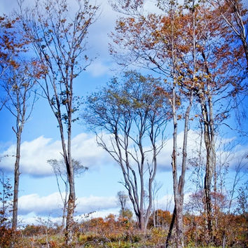Vertical Landscape Photo - Tree Art Photography - Tribal Blue
