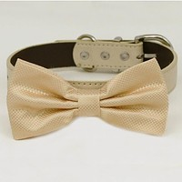 Ivory bow tie collar XS to XXL collar and bow tie, adjustable, Puppy bow tie, handmade, dog of honor ring bearer