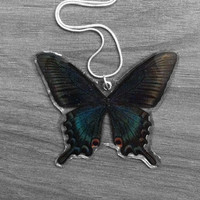 Real Alpine Swallowtail Necklace