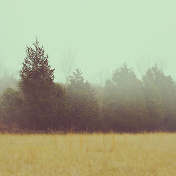Photographic Wall Art 8x10 Fine Art Home Decor, Foggy Landscape with Pine Trees