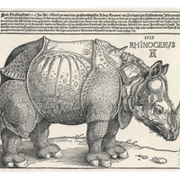 The Indian Rhinoceros is the Largest of the Asian Spiecies Giclee Print by Albrecht Dürer at Art.com