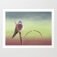 American Kestrel  Art Print by North Star Artwork