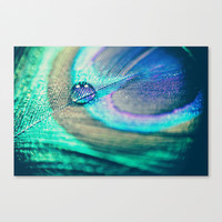 Peacock Stretched Canvas by Marianne LoMonaco
