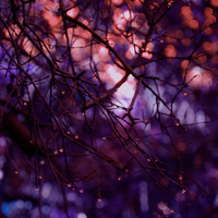 Purple Decor Fine Art Nature Photography Twilight magenta lilac lavender Sunset Sundown magical artistic woodland home decor Nursery Baby