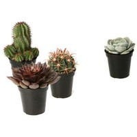 Altman Plants, Assorted 3.5 in. Cactus and Succulents Plants (3-Pack + 1 Free), 0881015 at The Home Depot - Mobile