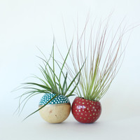 Holiday Air Plant Planter Duo with Air Plants - Teal, Red, White & Gold Spotted