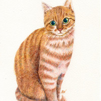 """cat drawing art print  """"A Sweet Ginger """"  yellow tabby cat lover gift wall room dorm decoration (118)"""
