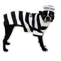 Casual Canine Prison Pooch Costume, Large