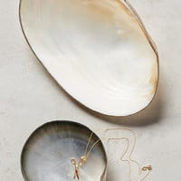 Seashell Trinket Dish