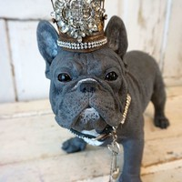 French blue bulldog statue hand painted adorned with crown and rhinestone leash