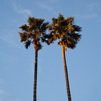 Palm trees photo print love California by aphotographiclife