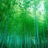 Bamboo Forest, Sagano, Kyoto, Japan Photographic Print at AllPosters.com