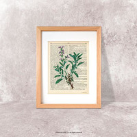 Sage herb dictionary print-Kitchen wall art-sage herb on book page-sage herb print-Botanical print-herbs spices print-kitchen decor-DP185
