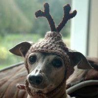 Dog hat - REINDEER - Christmas pet hat - Humorous Funny Antlers - 2 to 20 lb pets