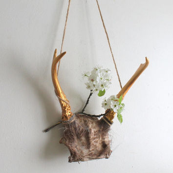 Small Painted Gold Antlers with Skull and Hair Bits, Tribal Woodland Wall Decor