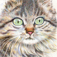 """cat drawing art print  """"A Handsome Cat """"  long hair cat lover gift unique wall room decor (119)"""