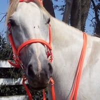Any Size Hunter's ORANGE Horse Halter Bridle Combo & Reins Trail/Endurance/Show Beta Biothane