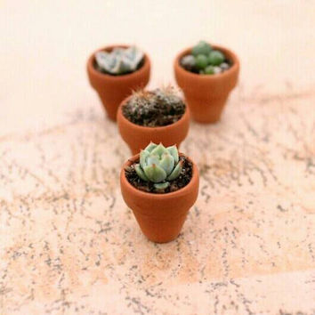 DIY | Cacti | Cactus | Plant Your Own Mini Cacti | Mini Cactus | Succulent | Dime Sized Pot