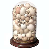 Rare victorian collection of different bird's eggs.