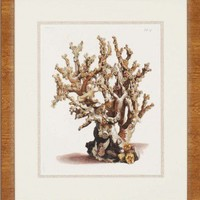 """Paragon Antique Coral II by Unknown Waterfront Art - 30"""" x 26"""" - 4746"""