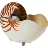 """8"""" Nautilus w/ Sterling Silver, Brown, Coral, Barnacles, Shells & Starfish"""